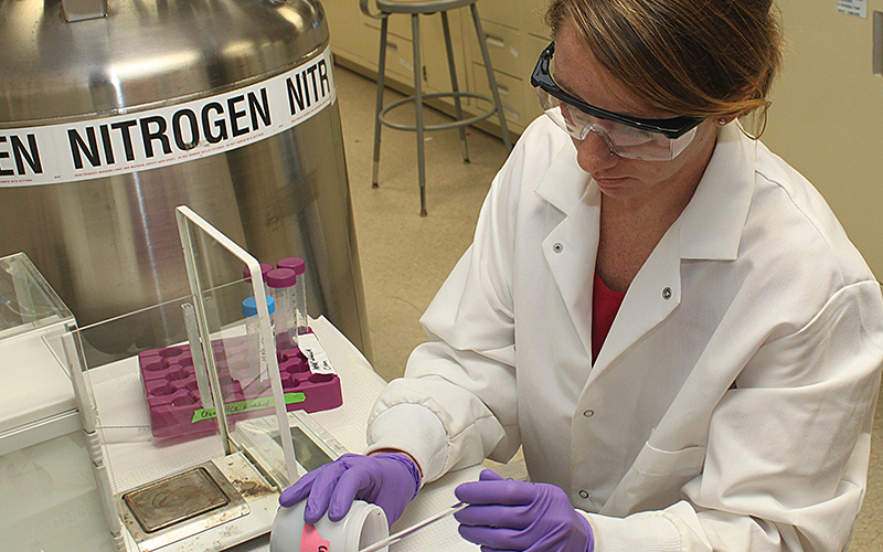 Graduate student works with soil samples