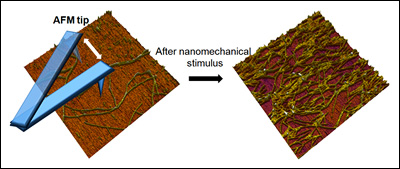 Fig. 1 Self-Assembly of Nanofibers